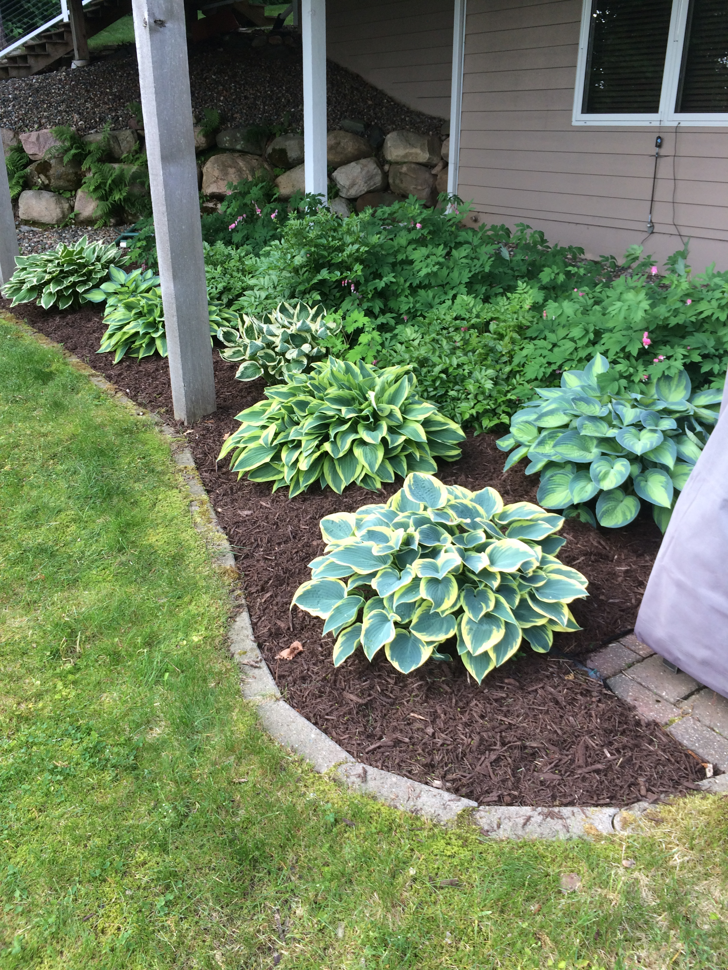 perennial garden with mulch